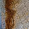 Anmut (50x75) - 2011